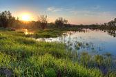 Spring sunset landscape — Stock Photo