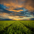 To sunset trough the field — Stock Photo