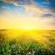 Sunset above the flowers — Stock Photo