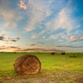 Hay on field — Stock Photo