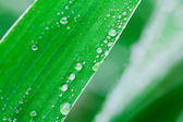 Plants after a rain — Stock Photo