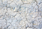Dried up ground — Stock Photo