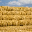 Harvest(cleaning) of cereals - Stock Photo