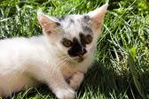 Malé kotě — Stock fotografie