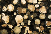 The cut down trees — Stock Photo