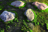 Moss and stones — Stock Photo