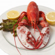 FRESH LOBSTER . — Stock Photo