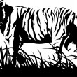 Tiger black and white. Vector - Stock Vector