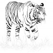 Stock Vector: Tiger black and white
