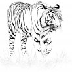 Tigre noir et blanc — Vecteur