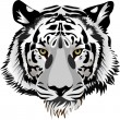 Tiger head.Vector — Vector de stock