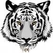 タイガー head.vector — ストックベクタ