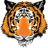 Tiger head. Vector — Stock Vector