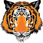 Tiger head. Vector — Stock Vector