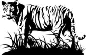 Tiger black and white. Vector — Stock Vector