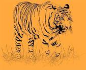 Tiger orange. Vector — Stock Vector
