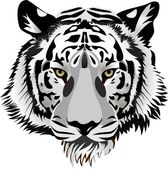 Tigre head.vector — Vector de stock