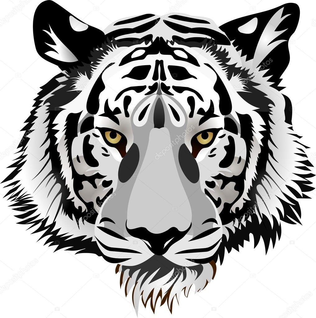 Рисунки тигра с оскалом