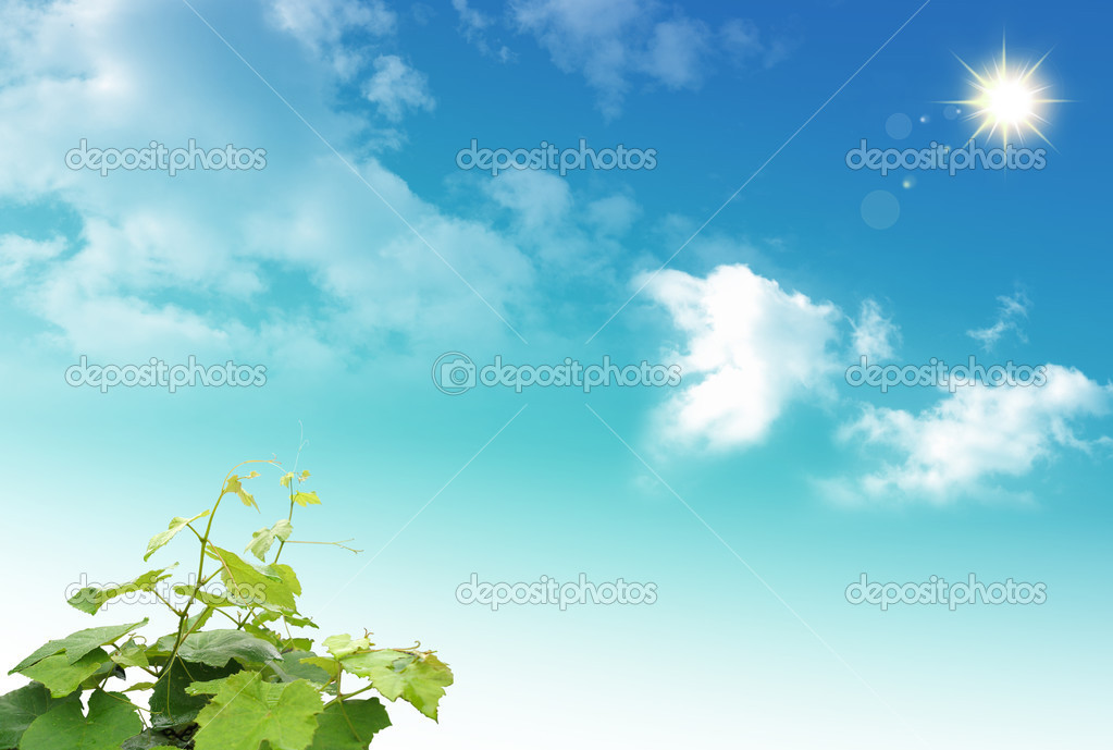 Wonderful green plant on the sky background — Stock Photo #3644865