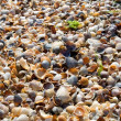 Seashell background — Foto Stock