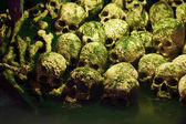 Human skulls — Stock Photo