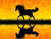 Horse — ストック写真