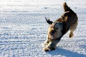 Köpek oynama — Stok fotoğraf