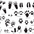 Animal trails with title — Imagen vectorial