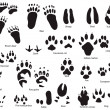 Animal trails with title — Stockvector #3453368