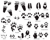Animal trails with title — Stockvector