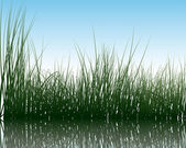 Grass on water — Stock Vector