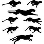 jeu de chats sauvages — Vecteur