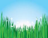 Grass background — Stock Vector