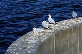 Gulls on the parapet — Stock Photo