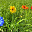 Four flowers in meadow — Stock Photo