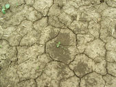 Ground crackinged from drought — Stock Photo