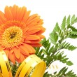Gerbera over white — Stock Photo
