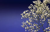 Beautiful decorative branch with white flowers — Stock Photo