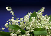 Beautiful fresh Lily-of-the-valey — Stock Photo