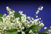 Beautiful fresh Lily-of-the-valley — Stock Photo