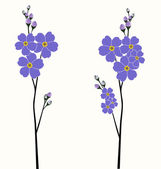 Illustration of the beautiful forget-me-not flowers — Stock Vector