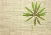 Dried green leaves over fabric textile — Stock Photo