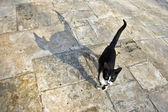 Cat with Shadow — Stock Photo
