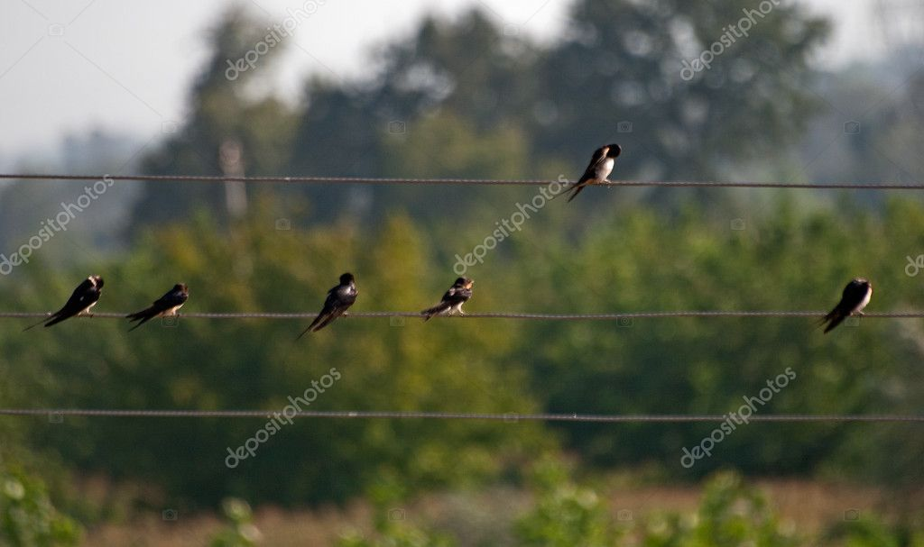 Birds lined on wire like a musical note in front of trees — Stock Photo #3805148