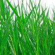 Royalty-Free Stock Photo: Green grass backgound