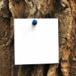 Paper attached to krone of a tree — Foto Stock