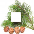 Stock Photo: Branch of pine with cones