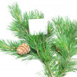 Branch of pine with cones — Stock Photo