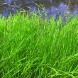 Stock Photo: Green grass against river
