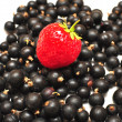Berrys - strawberry, currant — Stock Photo